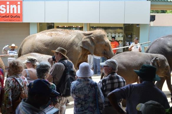 Elefanten Zug